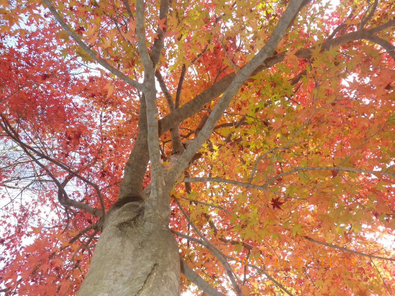 秋の晴れ着