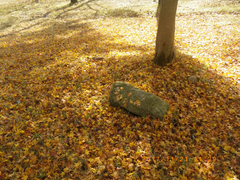 紅葉の絨毯3