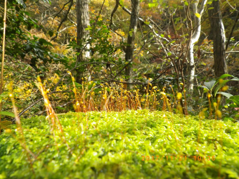 森の中のもう一つのミクロの森