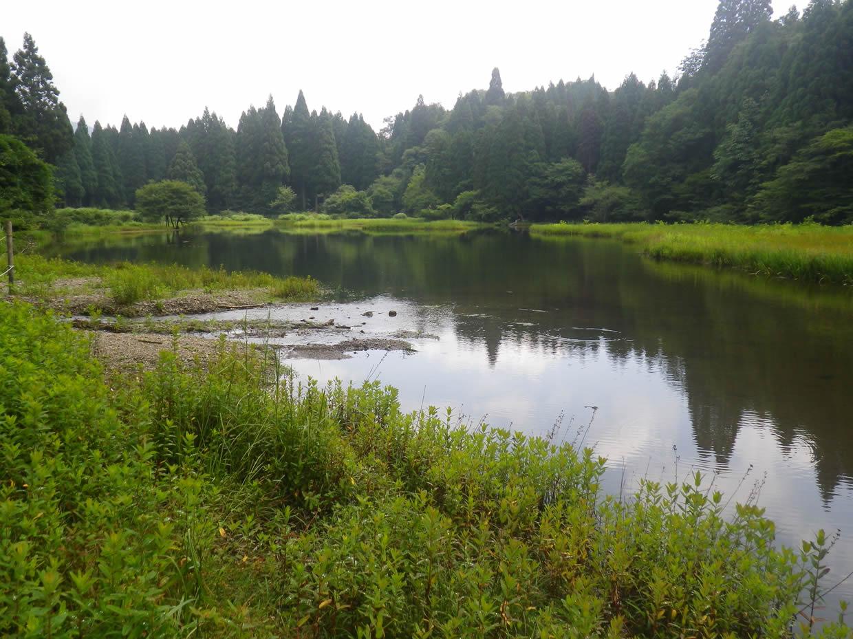 平池の水面に映る木々