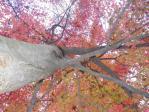 秋の晴れ着3