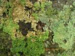 苔のグラデ